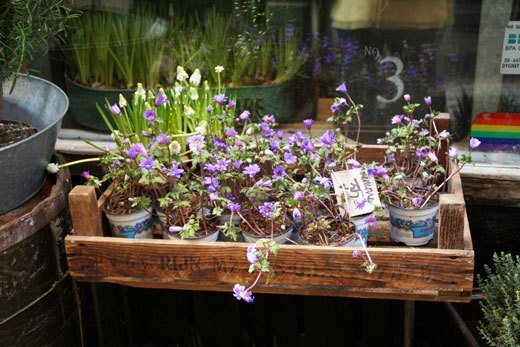 Hello spring store spotlight your local flower store skimbaco flower shop in sweden european flower shop photos mightylinksfo
