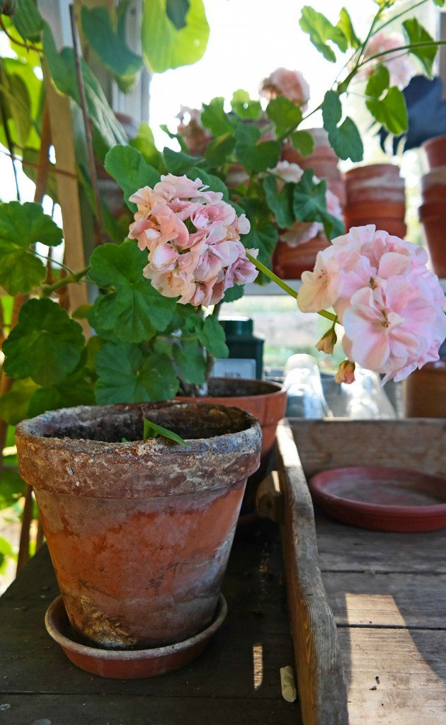 potted flowers | Photo: Katja Presnal @skimbaco