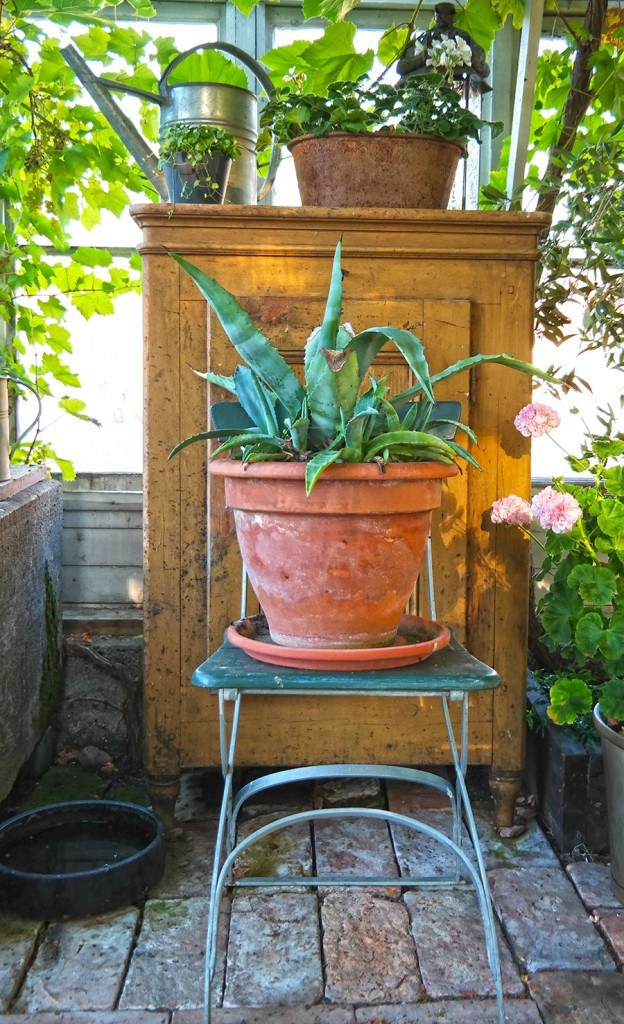 Garden greenhouse and potted succulents | Photo: Katja Presnal @skimbaco