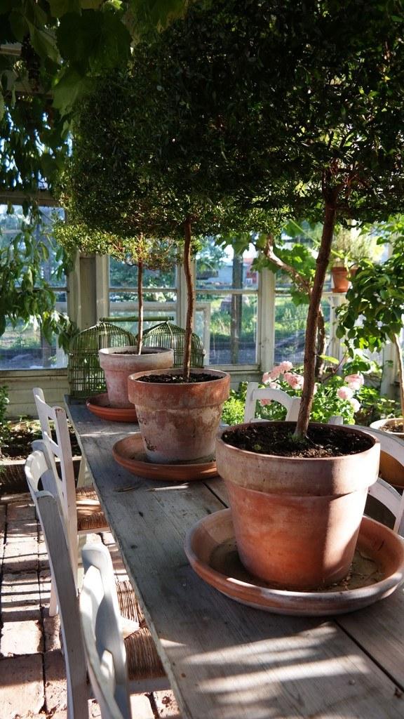 topiaries-in-greenhouse