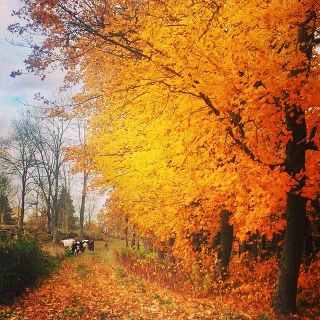 Enjoy fall colors